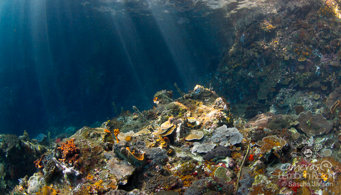 Critters of the Lembeh Strait | Episode 10 – 2015 | Wide Angle Wonder Part 1