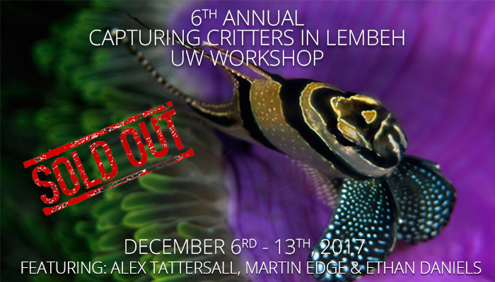 6th Annual Capturing Critters in Lembeh  – Underwater Photography & Videography Workshop December 6th – 13th, 2017