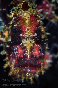 Capturing Critters in Lembeh