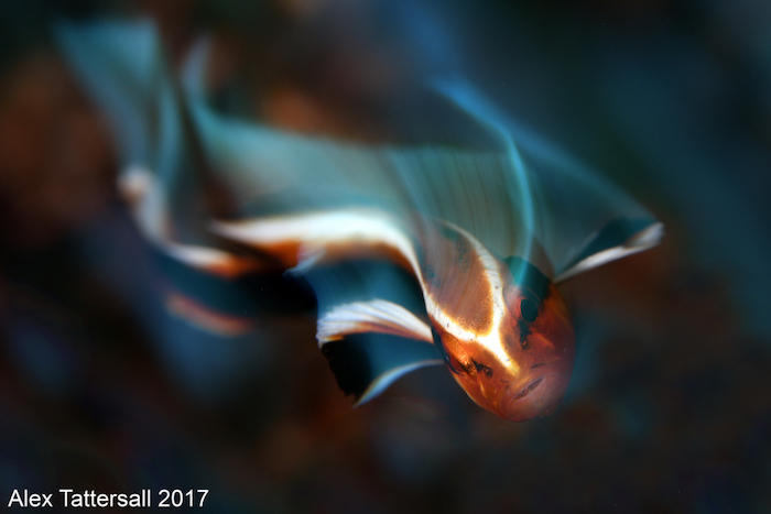 Underwater-Photography-Workshop