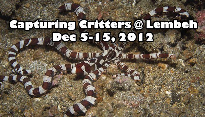 'Capturing Critters @ Lembeh' Workshop Slideshow