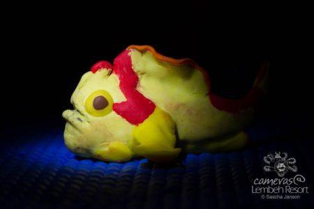 Underwatervideography - Workshop - Lembeh Resort