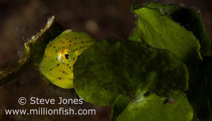 Trip Report May 2013 By Steve Jones www.millionfish.com