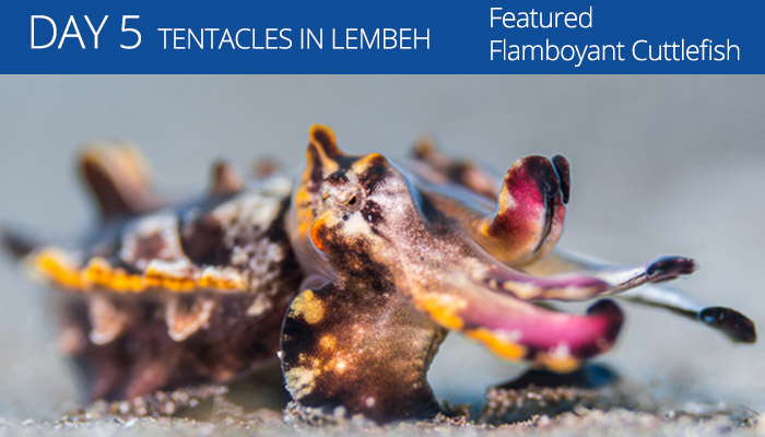 Tentacle Festival - Lembeh Resort - Lembeh Strait