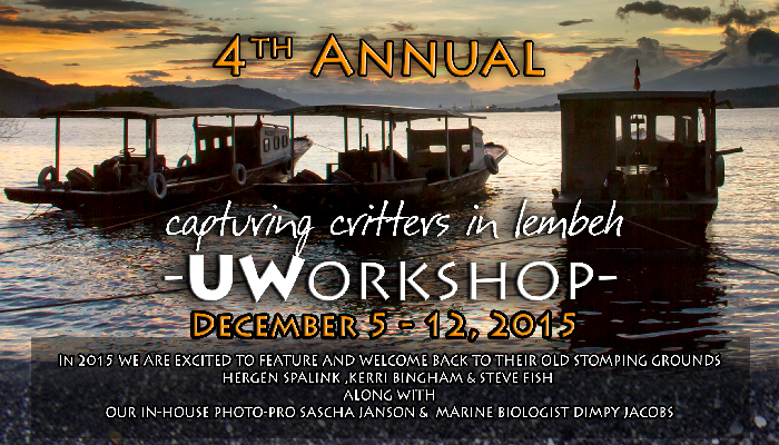 4th Annual Capturing Critters in Lembeh – UW Workshop December 5 -12, 2015