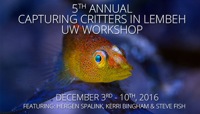 5th Annual Capturing Critters in Lembeh – Underwater Photography Workshop December 3rd – 10th, 2016