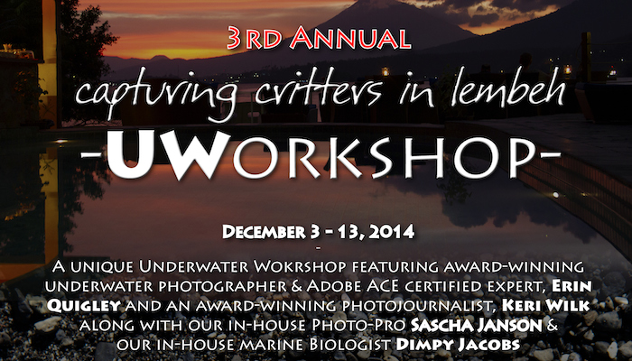 3rd Annual Capturing Critters in Lembeh – UW Workshop December 3-13, 2014