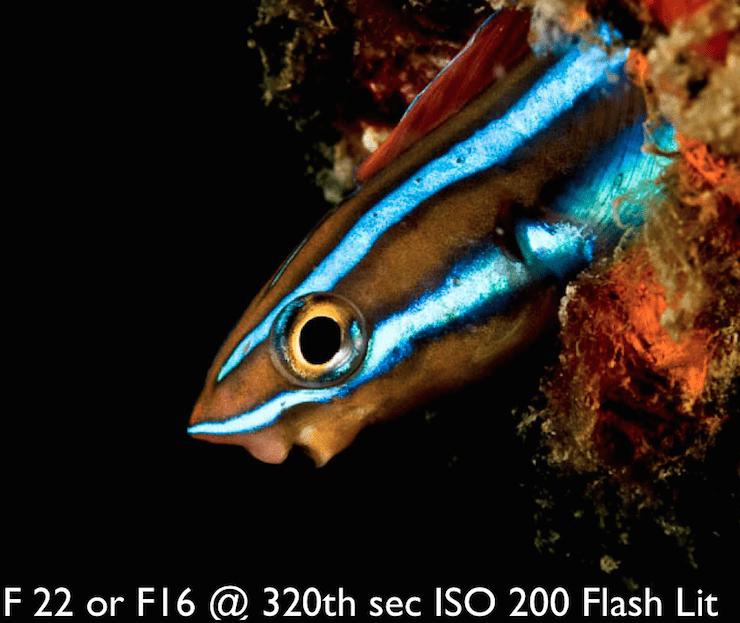 Black-background-underwater