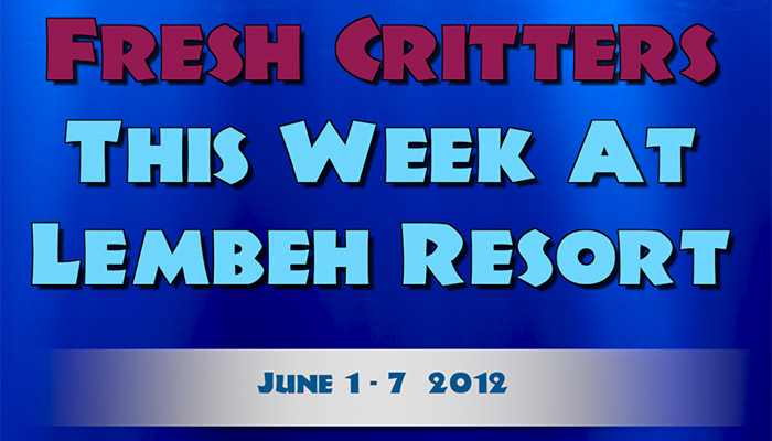"Watch this week's episode of ""Fresh Critters At Lembeh"""
