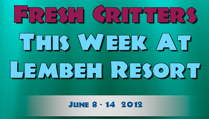 Our New Episode of Fresh Critters At Lembeh