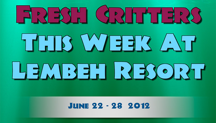 Our weekly video of Lembeh Strait Critters