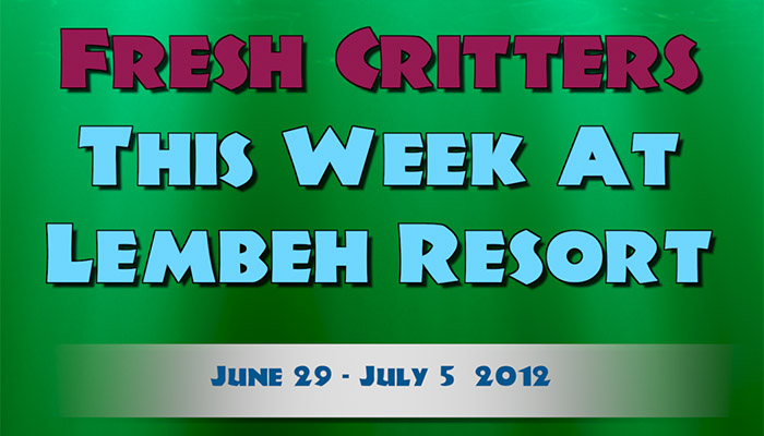 """Watch Episode 50 of """"Fresh Critters At Lembeh"""""""