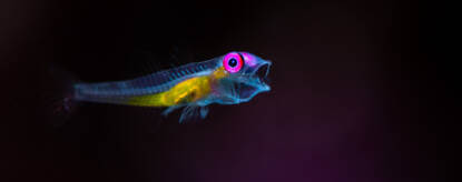 Lembeh Underwater Photography Workshop