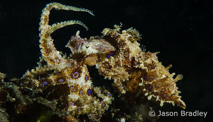 Capturing Critters in Lembeh Workshop 2013: Day 3 & 4