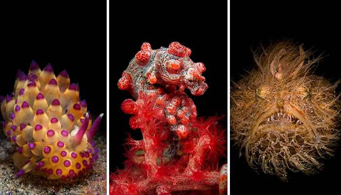 Dive Into Pink - Lembeh Strait
