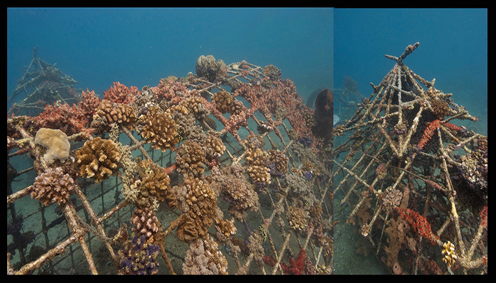 Lembeh Resort & Critters@Lembeh House Reef