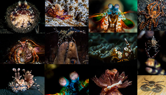 Lembeh Gulen Critter Shootout 2016  Round 2 – Invertebrate Results Announced – It Couldn't Be Closer!