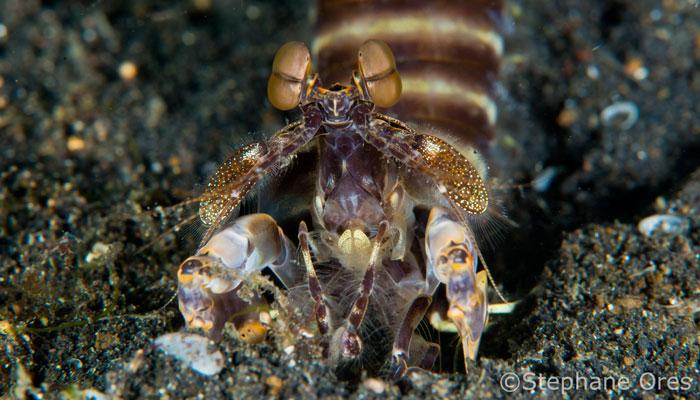 Love Life of a Mantis