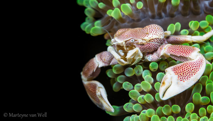 Great Combination Of The Best Team In Lembeh