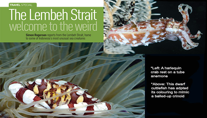 """The Lembeh Strait """"Welcome to the Weird"""""""