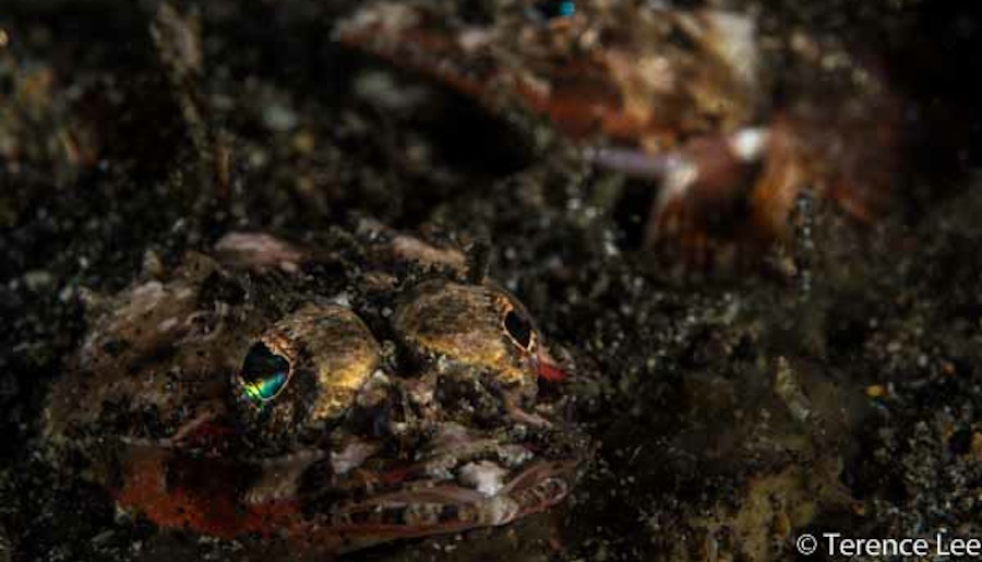 Images From Wetpixel Lembeh Workshop 2013 Day 5 & 6