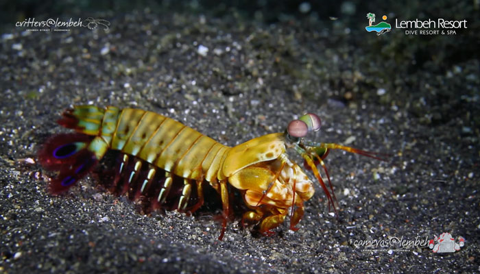 Critters of the Lembeh Strait | Episode 17/2014