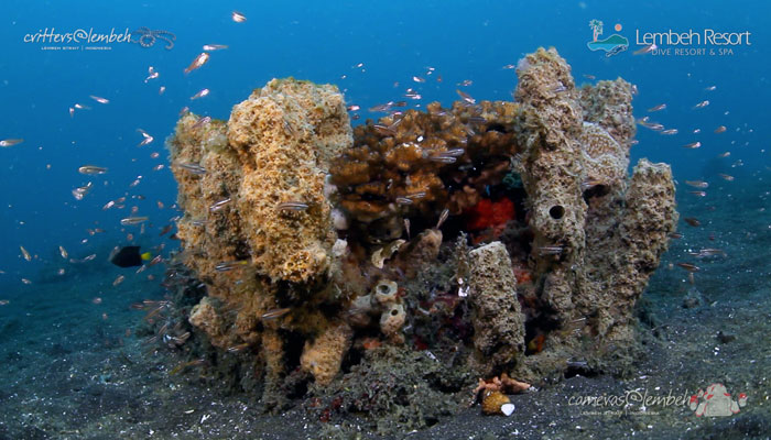 Critters of the Lembeh Strait   Episode 20/2014