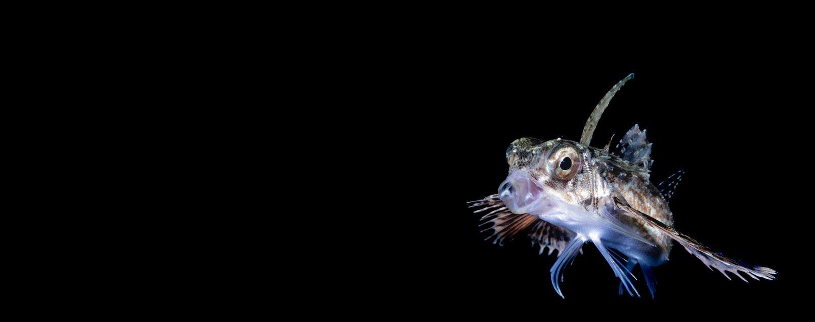 blackwater photography lembeh