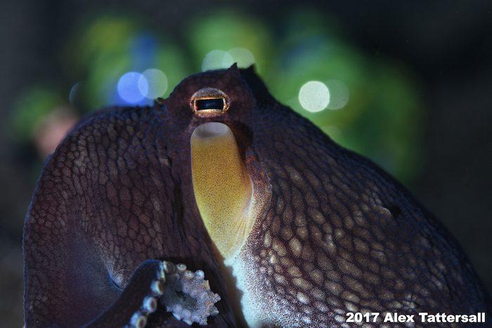 Underwater-Photography-workshop-Lembeh-Resort