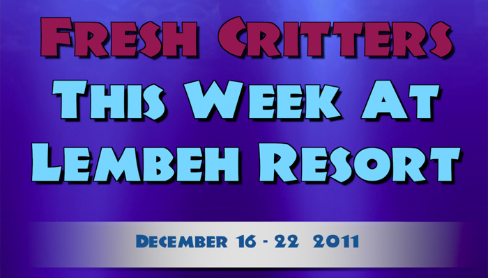Weekly Web 22 – Flamboyant Cuttlefish Hatching & Fighting Octopuses