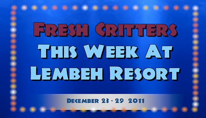 Weekly Web 23 – Closing Out 2011 and Welcoming in 2012